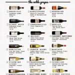 New Year, New Wines! The Bottles Noble Grape Wine Challenge