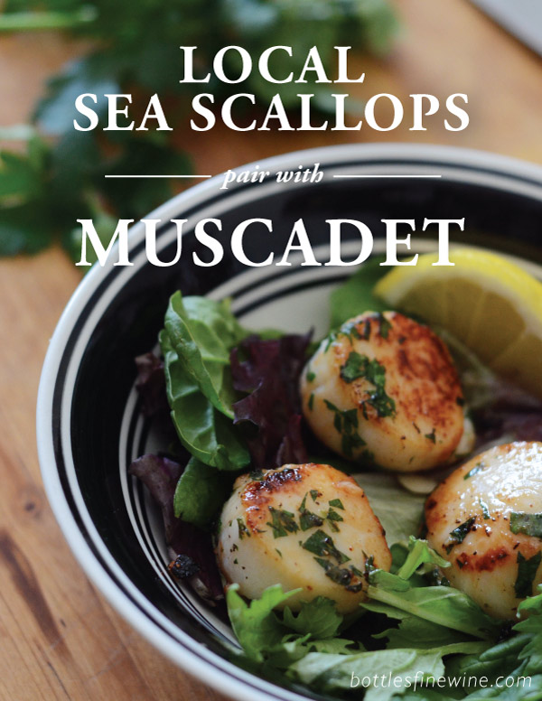 Scallop and Wine Pairing