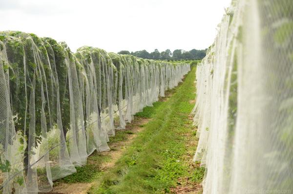 Newport Vineyards