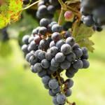 Newport Vineyards Tour – Rhode Island Wineries