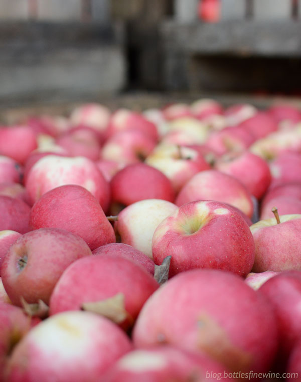 Apples - learn about hard cider styles